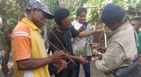 Tokoh Adat Atengmelang, Elias Padamai sedang peragakan cara memasang perangkap Tikus dari alat tradisional (Dak), Sabtu (3/11/2020) di Atengmelang.