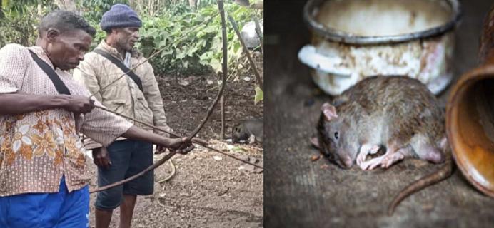 Tokoh adat Atengmelang Elias Padamai sedang peragakan cara menangkap Tikus menggunakan alat tangkap busur panah, Sabtu (3/11/2020) di Atengmelang.